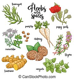 Spices and herbs vector set. Colored on white - Spices and...