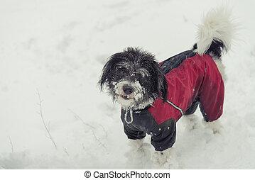 kutya, Tél, öltözék