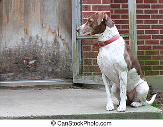 Bird Dog Waiting by the Backdoor - Bird dog waiting to go...