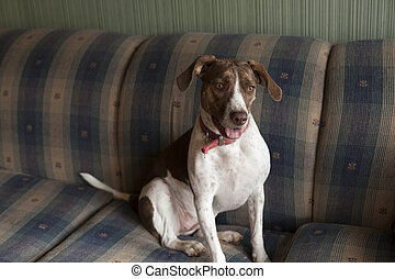 Dog Standing on Couch
