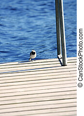 Little bird sits on a pier about lake