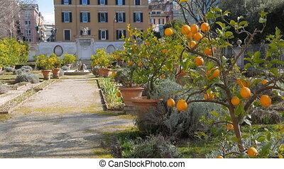 Lemon Garden Villa Borghese, Rome, Italy. UltraHD (4K)