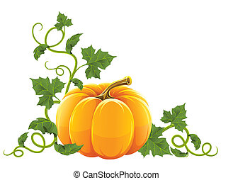 ripe orange pumpkin vegetable with green leaves vector...