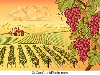 Vineyard valley landscape - Retro vineyard valley landscape...