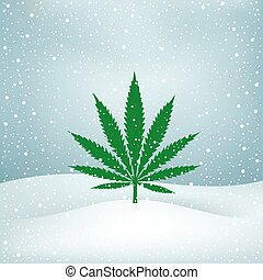 Hemp grows snow