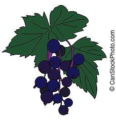 black currant - Sprig of black currant with a round blue...