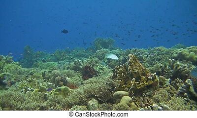 Colorful coral reef with many fish. Anthias, Unicornfish and...