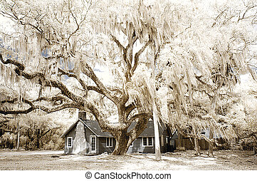 Old Florida - Image depicts an old cracker style house in...