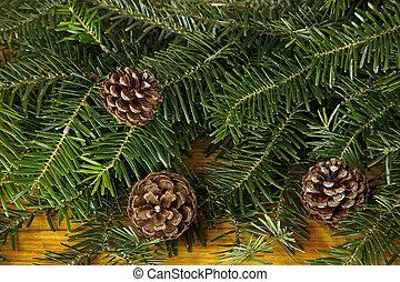 abeto, árvore,  cones, fundo