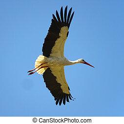 stork - flying stork