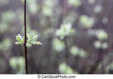 Wild little flowers full of dew in the dense fog, Torcal De...