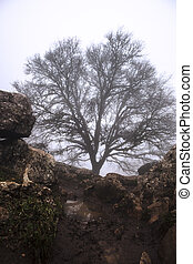 Maple tree in the fog, Torcal de Antequera - Maple tree in...