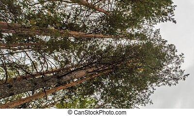 Trees. Russia, Time Laspe