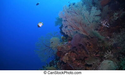 Coral reef with huge sea fans and plenty fish