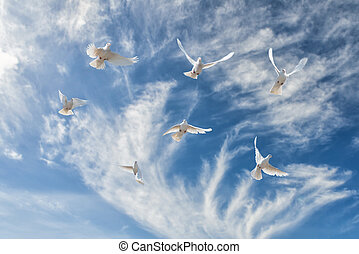 Composition of beautiful white doves in a blue sky. The concept of freedom, faith