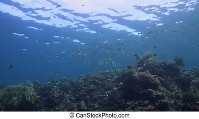 Coral reef with snapper - Coral reef with a school of...