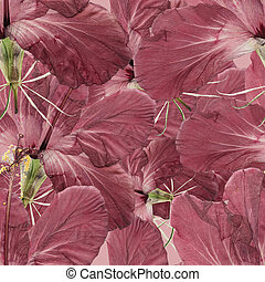 Hibiscus. Seamless pattern texture of pressed dry flowers. -...