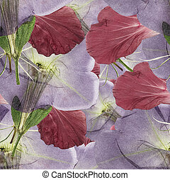 Hibiscus, Petunia. Seamless pattern texture of pressed dry...