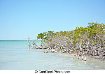 Mangrove forest at the summer season
