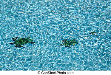 Three turtles on floor of pool - Three tiled turtle shapes...
