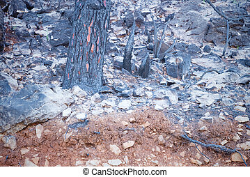 Forest fire aftermath - Aftermath of a large forest fire...
