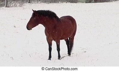 Horse on field in snow storm