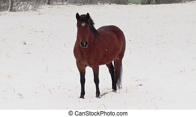 Horse on snow in winter