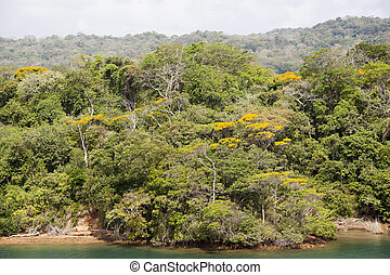 Panamian Jungle Shore - The view of the jungle on a shore of...