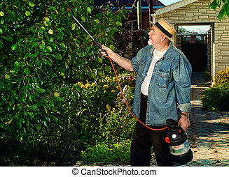 pests spray - Senior man pollinate trees in the garden with...