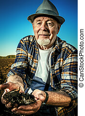 fertile black soil - An elderly farmer holds a handful of...