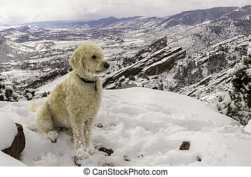 Above Redrocks in the Snow - Teig on a mesa in the deep snow...