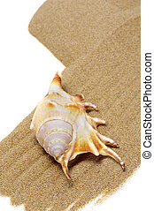 seashell in the sand - a seashell on the sand on a white...