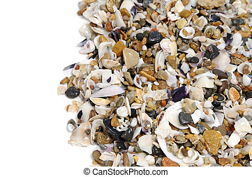 seashells background - a pile of seashells on a white...