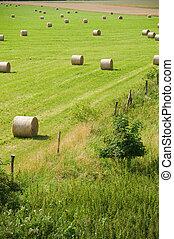 field with straw rolls