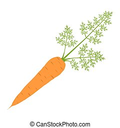 Carrot - Vector illustration of carrot in flat style