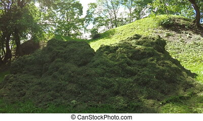 Pile mown lawn grass - Circular motion around mass of cut...