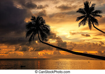 Silhouette of leaning palm trees at sunrise on Taveuni Island, Fiji