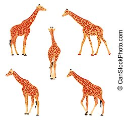 Colored vector illustration of a giraffe.