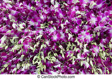 purple and white orchids flowers for sell in Pak Khlong...