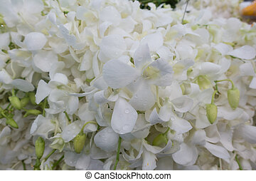 white orchids flowers for sell in Pak Khlong Talat,...