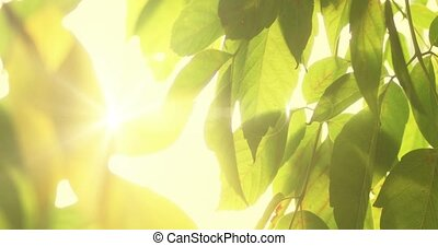 Picturesque lieaves closeup with sunflares, backlit closeup...