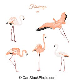 Set of isolated pink flamingos on white background