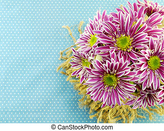 beautiful chrysanthemums pink flowers bouquet on blue...