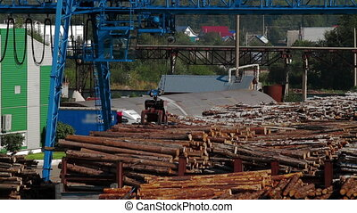 Modern lumber factory - Lumber industry Conveyors of logs in...