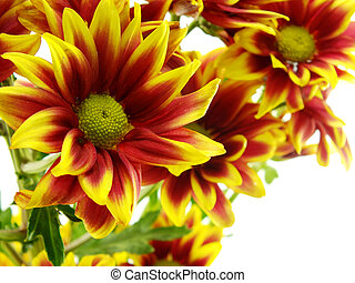 beautiful chrysanthemums yellow flowers bouquet