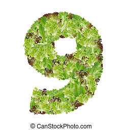 Number 9 made from hydroponics leaf vegetable isolated on...