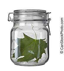 glass jar kitchen dish green leaf conservation ecology