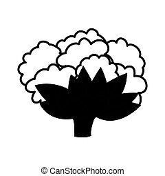 Isolated cauliflower design - Cauliflower icon. Organic...