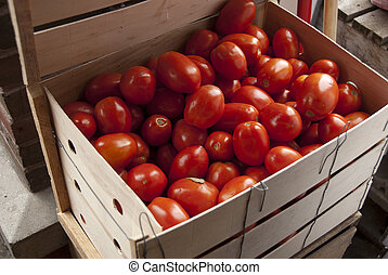 Tomatoes in crate - Crate filled with ripe, red tomatoes on...
