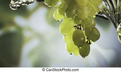 Wishihg a bunch of fresh heaithy green grapes.